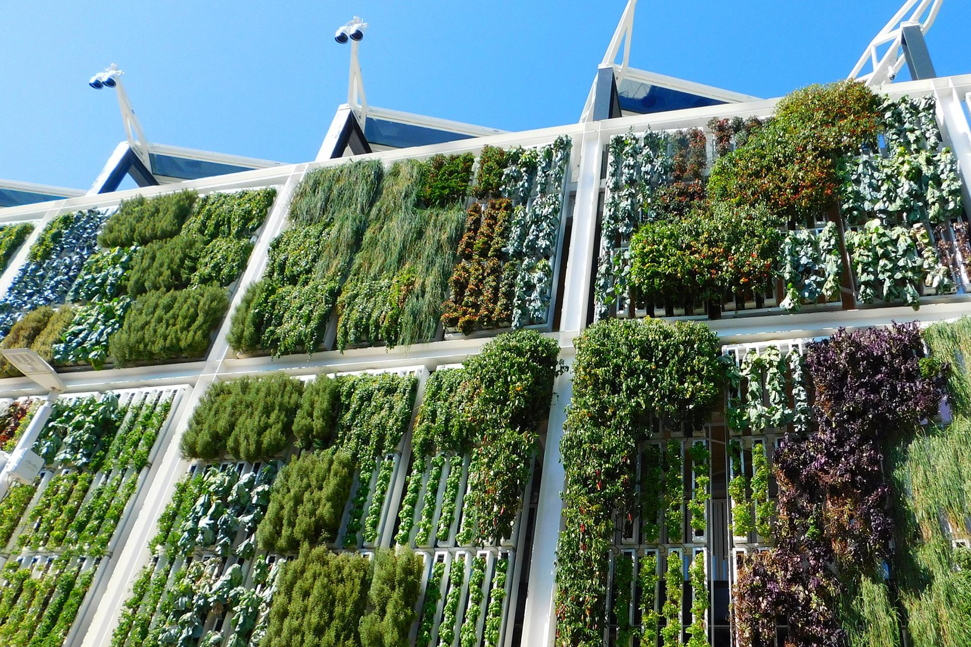 Terrazas y balcones verdes: mejorando el entorno en el que vivimos